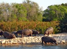 Botswana Serviced Mobile Safari Tour
