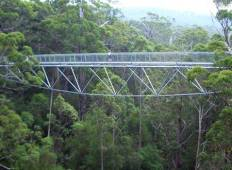 Full Day Valley of the Giants Tree Top Walk Tour