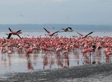 10 Days - Serengeti Migration safari Tour