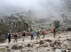 11 Days - Kilimanjaro and Wildlife Safari Tour