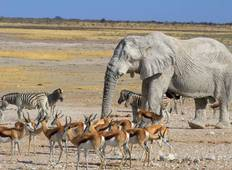 11 Days Ultimate Namibia Wilderness Tour
