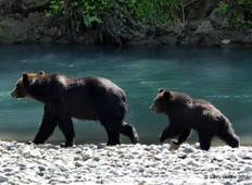 Grizzlies of Toba Inlet - 3 Days  Tour
