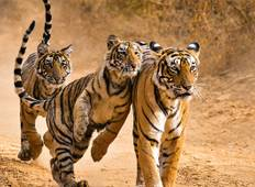 Essence of India with Ranthambore end Jaipur (2018) Tour