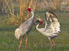 Golden Triangle Tour with Bharatpur Tour