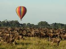 5 Days Tracking the great Wildebeest Migration  in Masai  Mara- Kenya on 4X4 Land Cruisers Tour
