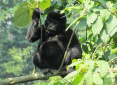 3 Day Gorilla Trekking Safari Tour