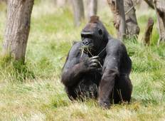3 Day Gorilla Trekking Budget Safari Tour