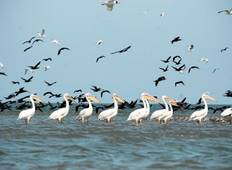 The Danube Delta in all its beauty (11 destinations) Tour