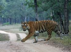 Luxury Wildlife Safari Tour in India Tour