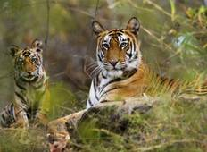 Exciting Wildlife Safari Tour in India Tour