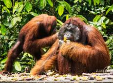 3D2N Orangutan in Tanjung Puting with Overnight on the Boat Tour