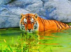 Royal India with Tiger Safari Tour