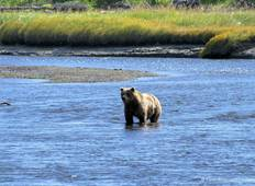 Alaska Bears Base Camp Adventure Tour