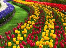 Tulips of Northern Holland 2019 Tour