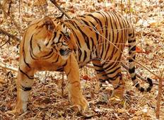 Golden Triangle Tour with Ranthambhore Tiger Reserve from Delhi Tour