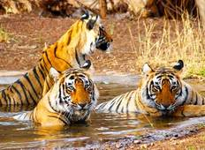 Golden Triangle Tour with Ranthambore from Delhi Tour