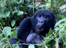 Uganda Gorillas and Game Safari Tour