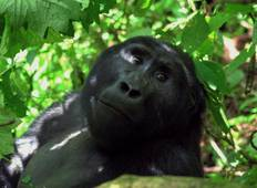 Uganda Wildlife and Activity Holiday Tour