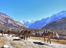 Langtang Valley Trek in Nepal Tour