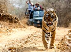 For The Love of Taj & Tiger - Golden Triangle With Ranthambore Tour Tour