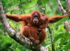 4 Days Orangutan and Elephant Sumatra Jungle Tour Tour