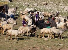 Migration with 8000 years old Nomads Tour