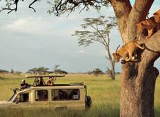 6 Days Safari  Tour