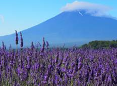 Discover Japan & Hike Mt Fuji Tour