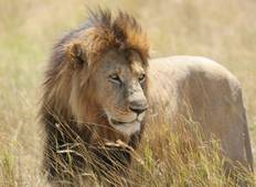 3 Days Masai Mara Group Camping Safari Tour