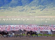 6D/5N Tanzania Plains Safari Tour