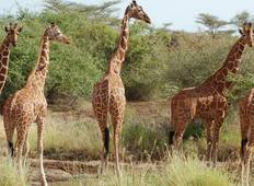 6D/5N Kenya Express Safari Tour