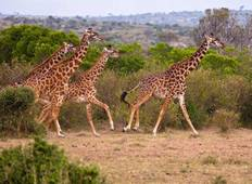 7D/6N Kenya Explorer Safari Tour