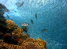 Reefs And Rainforests With Sailing (13 destinations) (from Sydney to Cairns) Tour