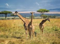 African Safari Adventure Tour