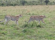 4 Days Masai Mara Safari and Lake Nakaru  Tour