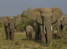 The Best of East Africa: 10 Days Kenya & Tanzania Safari Tour