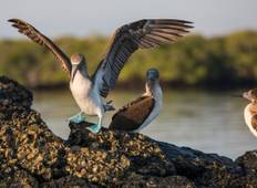 Galápagos Express Adventure: Wilderness & Wildlife Tour