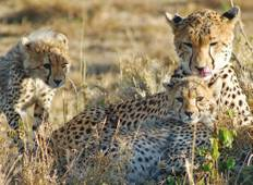 Masai Mara & Uganda Wildlife Safari Tour