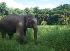 Thailand - Elephant Forest Refuge Tour