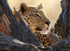 Botswana Wildlife Safari Tour