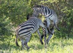 Family South Africa's Garden Route and Safari Tour