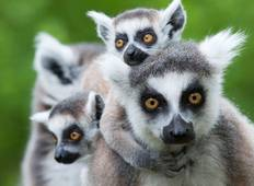Madagascar: The Lost Continent Tour
