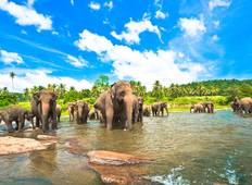 Highlights of Sri Lanka (2019 East Coast) Tour
