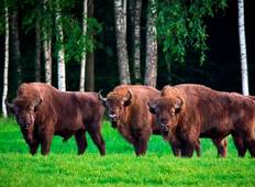 Wildlife Watching in Belarus Tour