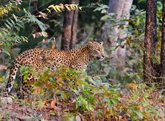 Indian Wildlife Adventure Tour