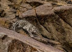 11 Day Snow Leopard Expedition with BBC Planet Earth II Trackers Tour