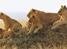 Ngorongoro wild camp safari 3 days Tour