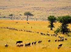 Serengeti The Great Migration  Tour