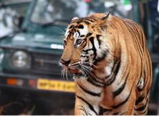 Golden Triangle Tour with Bandhavgarh Tour