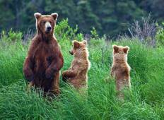 Alaska: Ocean Wildlife to Interior Wilderness Adventure - 11 Days Tour
